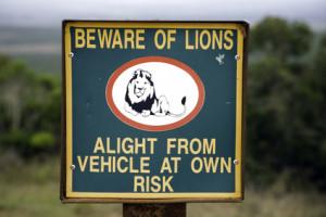 Achtung Löwen beim Campen